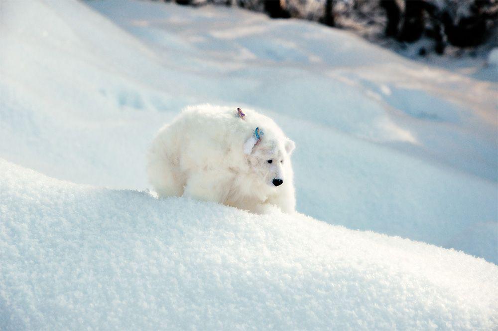 Kallispe_bear_white_forest_02