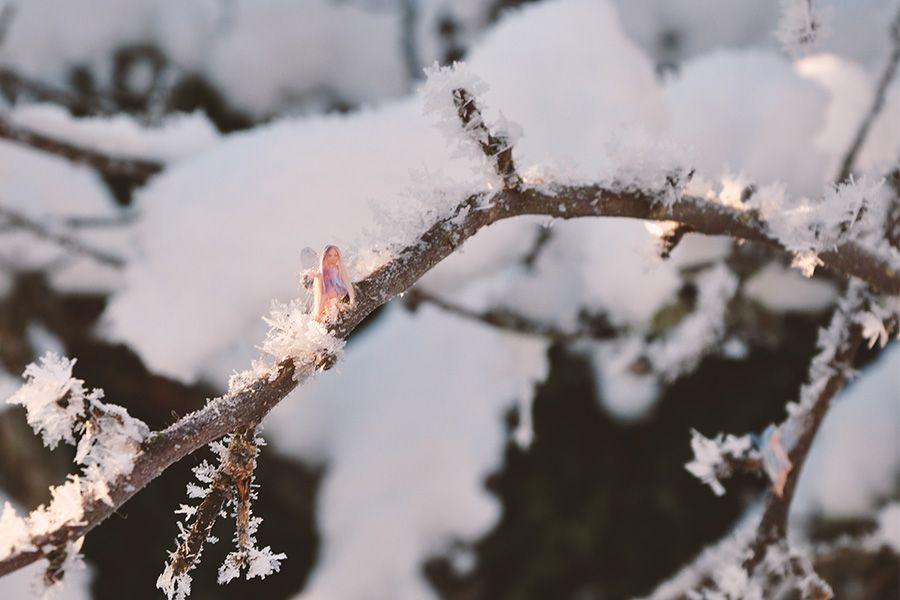 Kallispe_snow_fairies_02_600x900px